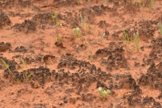 One inch of cryptobiotic soil takes a hundred years to grow. So watch your feet!