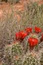Cactus flowers!
